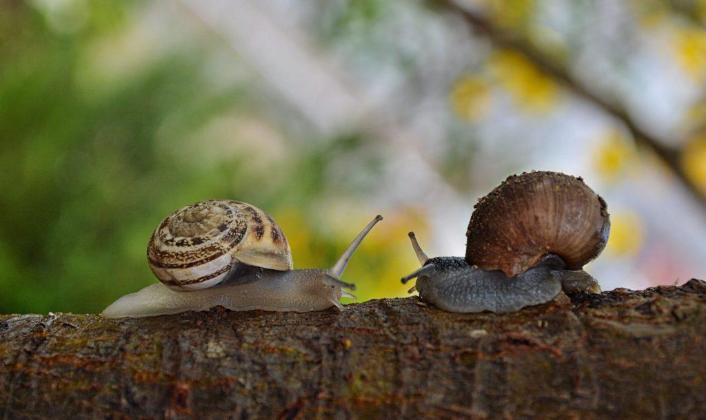 Slakken in de tuin: feiten en fabels