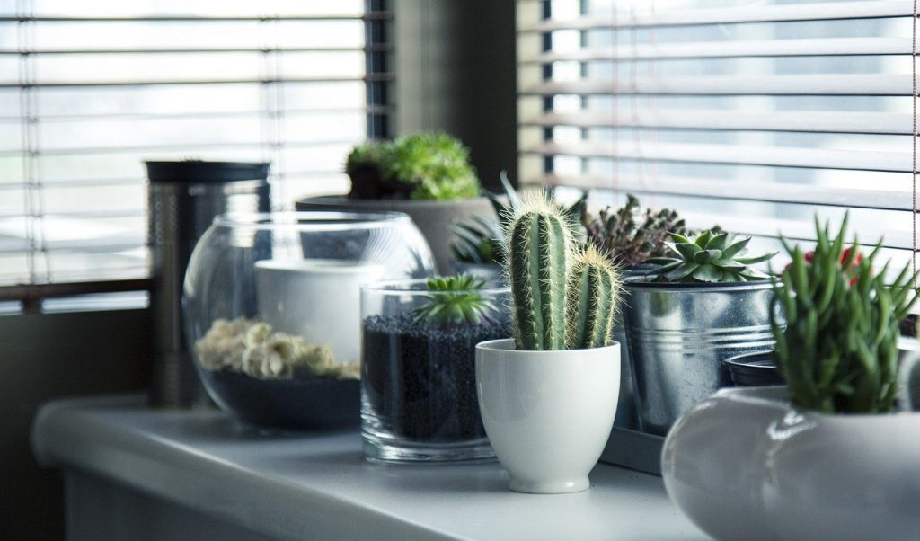 Welke kamerplant wil jij in je woonkamer hebben staan?